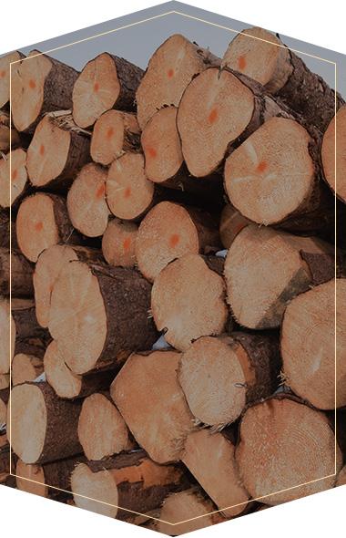 迈德高-甄选全球好木材品质升华